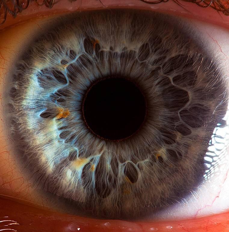 Сколько стоит проверить зрение на линзы