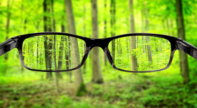 очки и деревья
