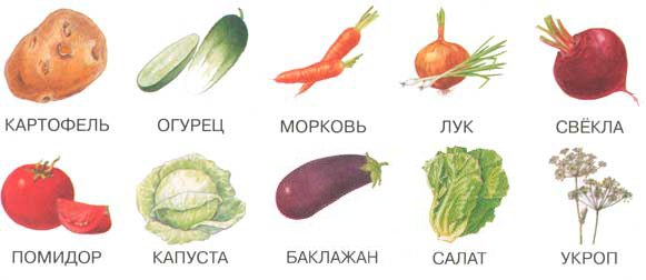 10 овощей