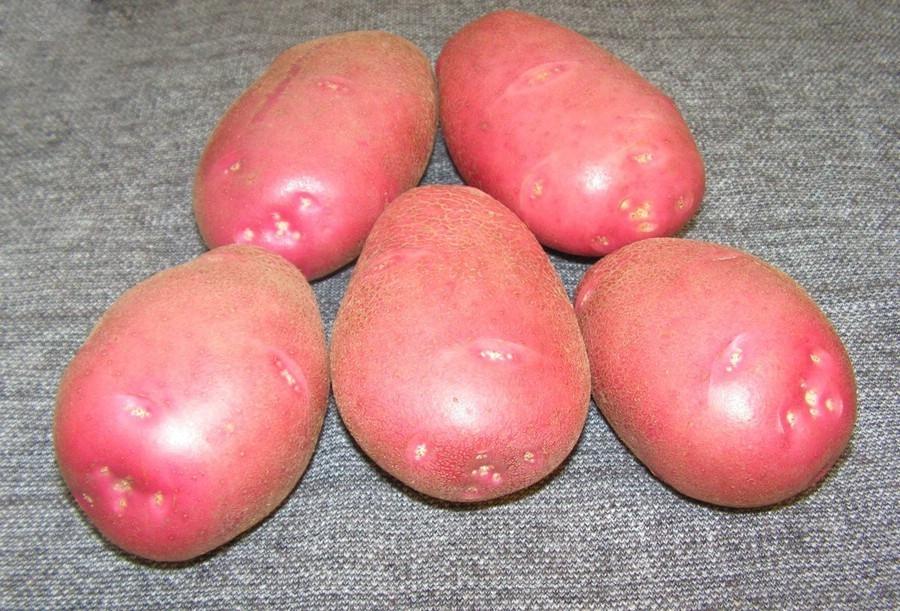 Розовый картофель
