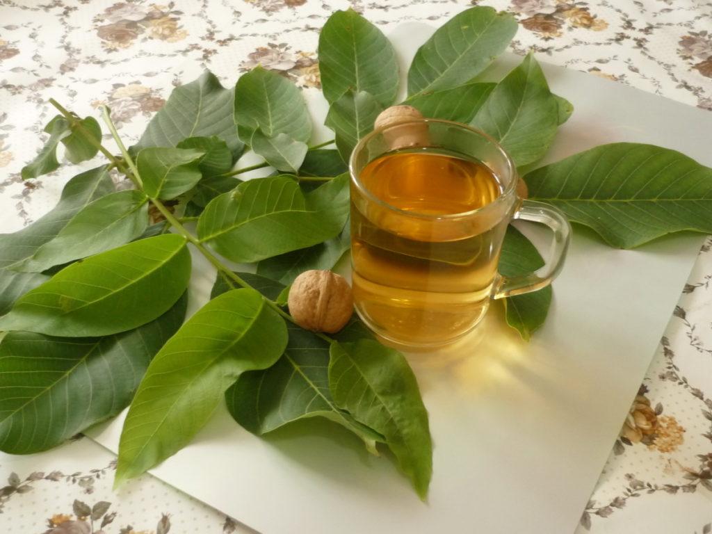 Настойка из листьев ореха грецкого