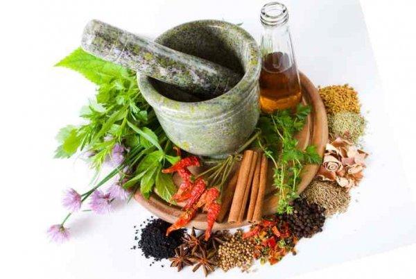 лекарственные травы и порошки