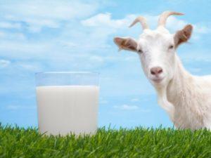 Козье молоко при дерматите