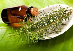 Масло чайного дерева от дерматита