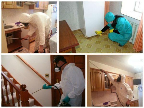 химическая обработка жилища