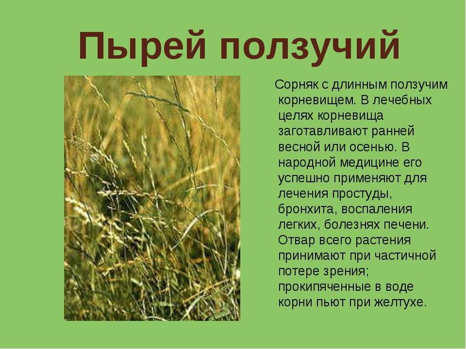 какие травы помогают от паразитов